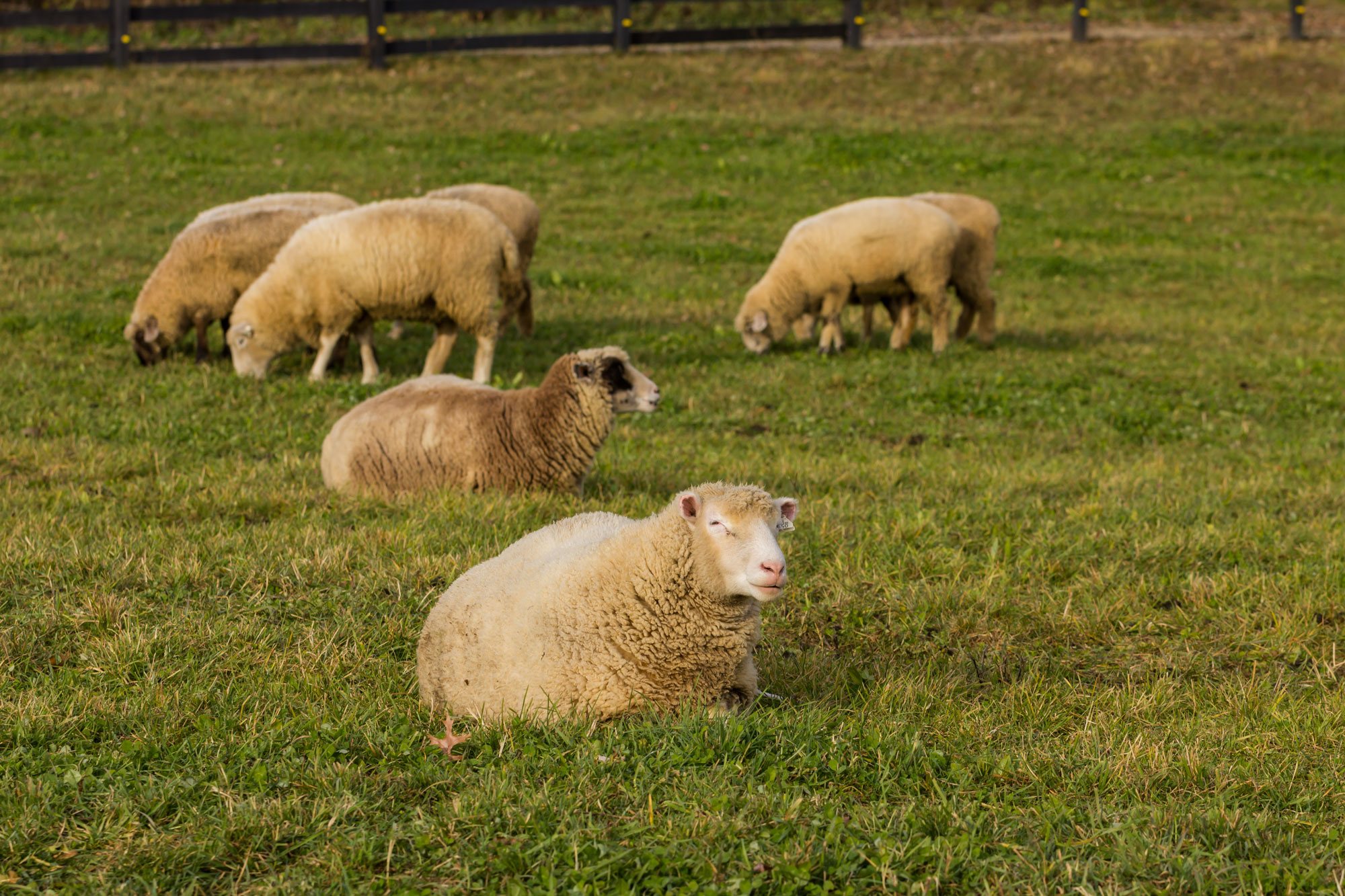 The Pasture Barn at Robin Hills Farm
