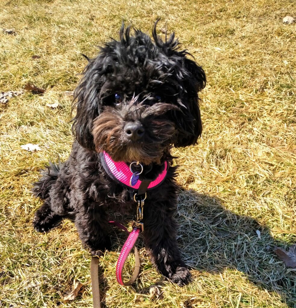 happy dog/dog walker/spring dog walks