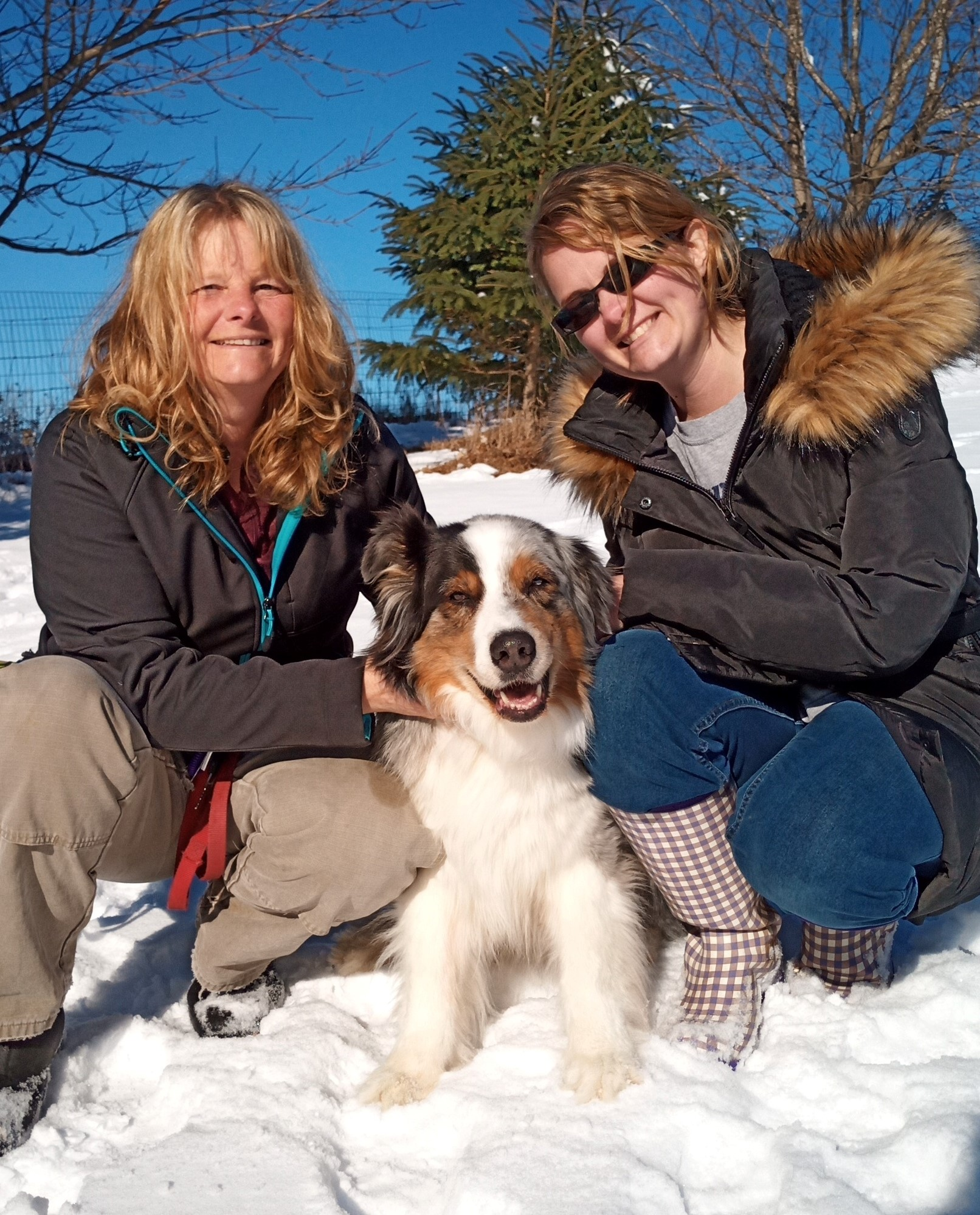 Dog Walker/ Dog Experts/for the love of Dogs/ winter dog walking