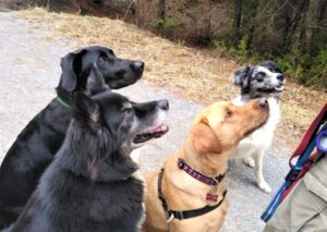 cropped-4-Dogs.jpg