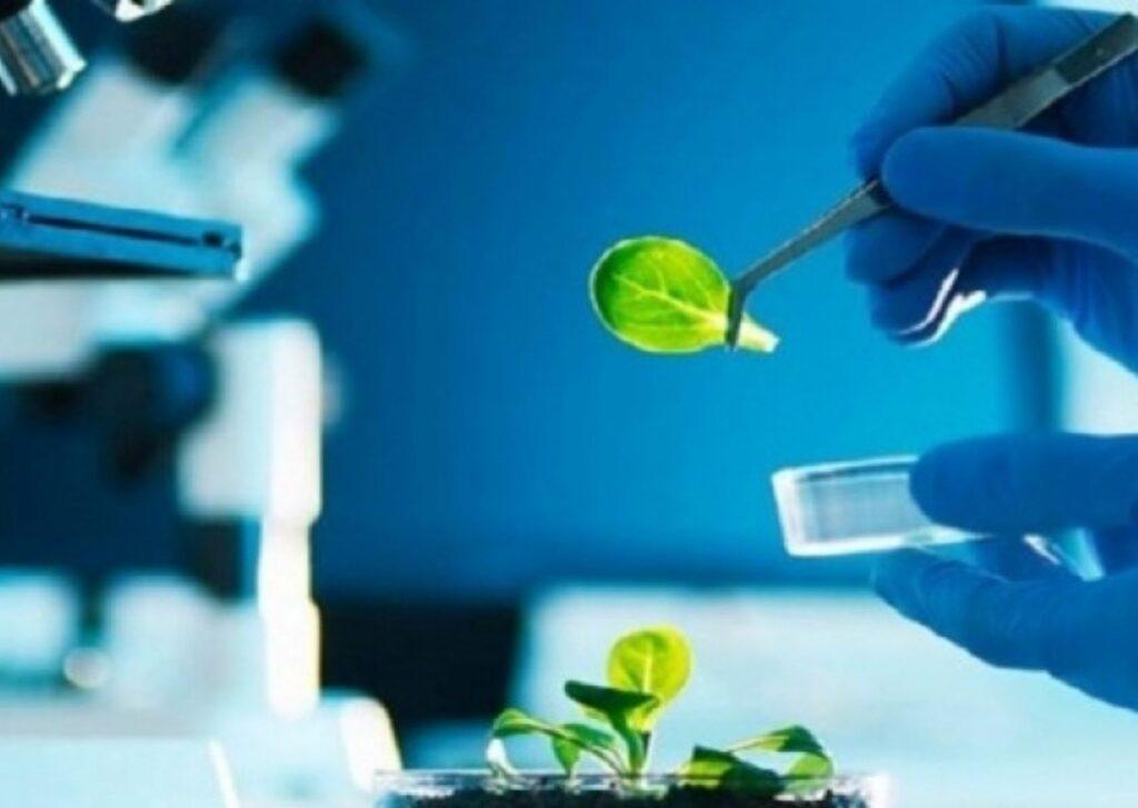 análise genética auxilia na produção de bioinsumos