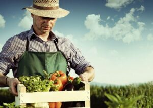 A análise genética do solo na agricultura orgânica
