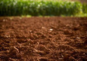 A biodiversidade microbiana em solos cultivados
