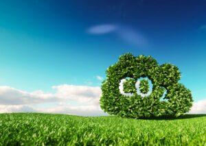 Os micro-organismos do solo no sequestro de carbono