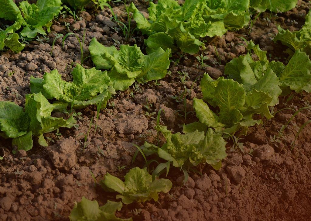 Estresse ambiental na horticultura