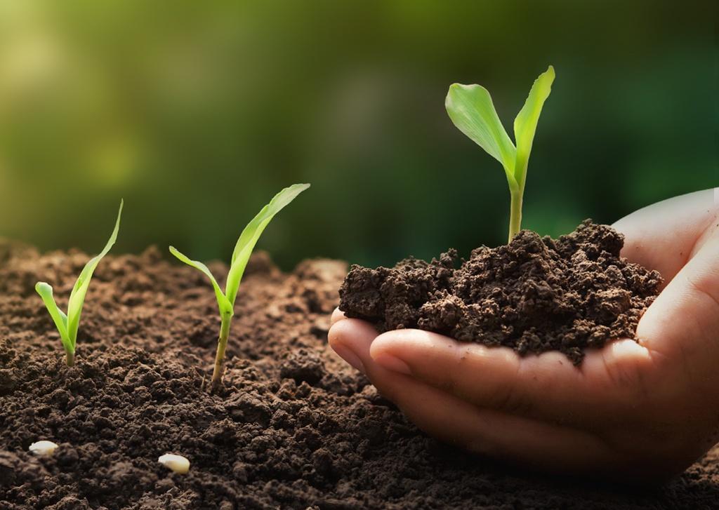 Como manter a qualidade do solo