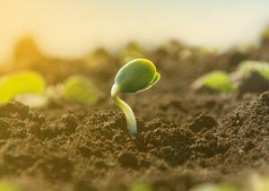 Os solos supressivos no combate às pragas
