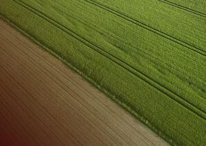Como a cultivar influencia o microbioma do solo