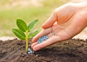 A fertilidade do solo e os micro-organismos que nele vivem