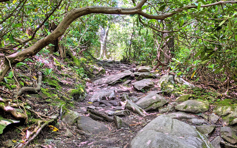 Beacon Heights Hiking Trail