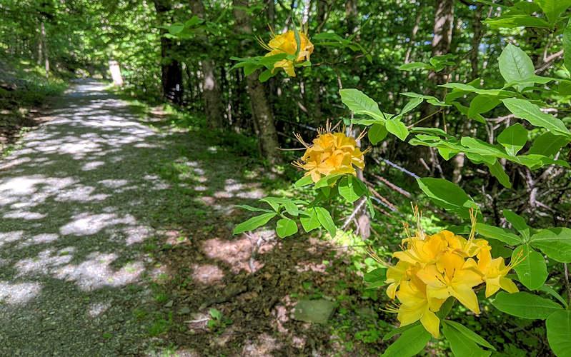 Rich Mountain Trail