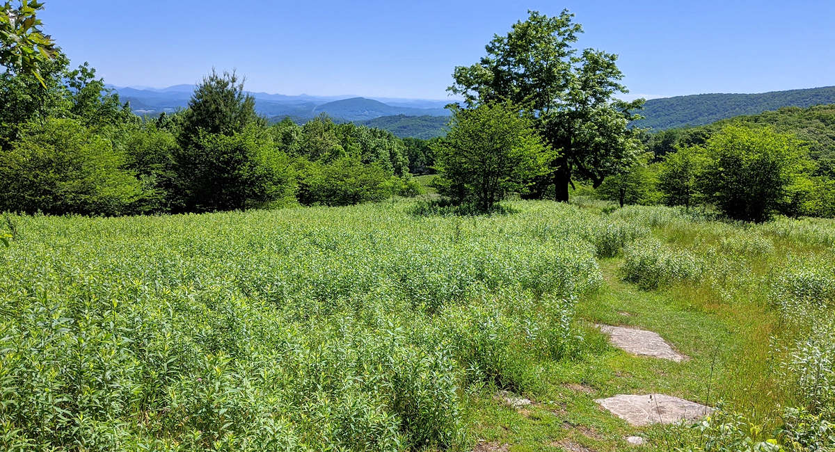 Rich Mountain, Moses Cone Park