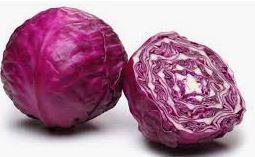 Head of Purple Cabbage