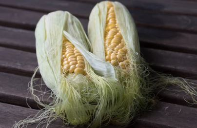 Corn on the Cob with the Husk and Tassel