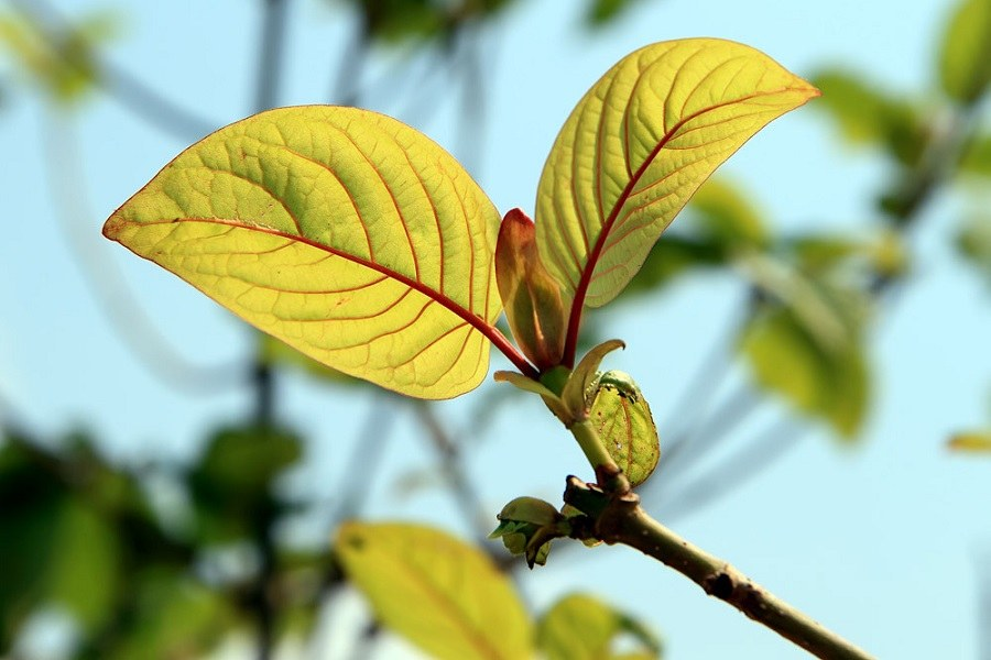 What is the Best Kratom Available in 2018?
