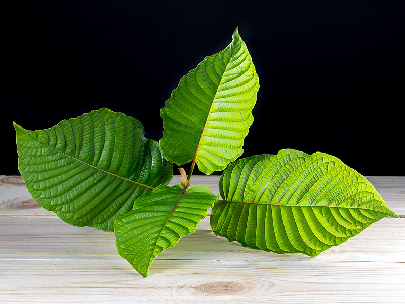 There Has Never Been An Overdose Death Directly Linked To Kratom, Versus 70,000 Overdose Deaths Per Year From Other Drugs
