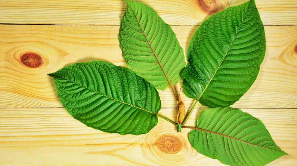 Kratom Tolerance Does Not Go Up Long Term
