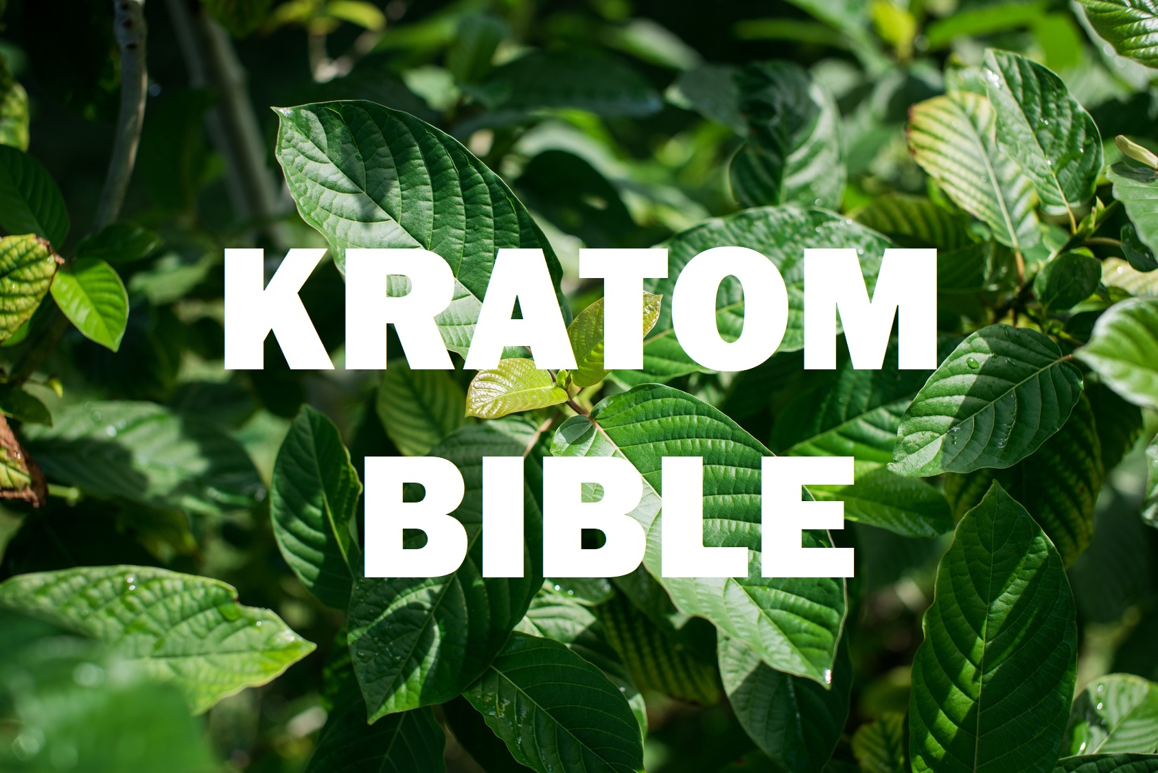 Kratom Bible PDF Download