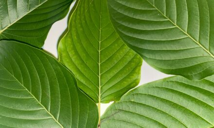Kratom Is An Excellent Tool For Combatting Opioid Addiction, But Kratom Alone Is Not Enough To Solve The Root Problems Which Cause Addiction; In This Article Are Additional Techniques To Defeat Opioid Addiction