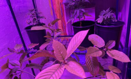 Kratom Growing Part 3: The Greenhouse Is Becoming A True Tropical Rainforest, With A Civilization Of Tropical Organisms Arising, And The Kratom Tree Is Loving It