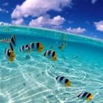 Snorkel+Mexico