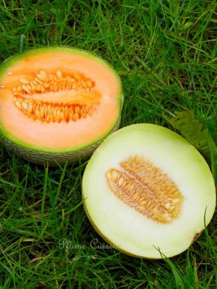 smoothie melon (7)