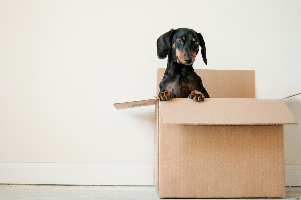 Cute Puppy In A Moving Box