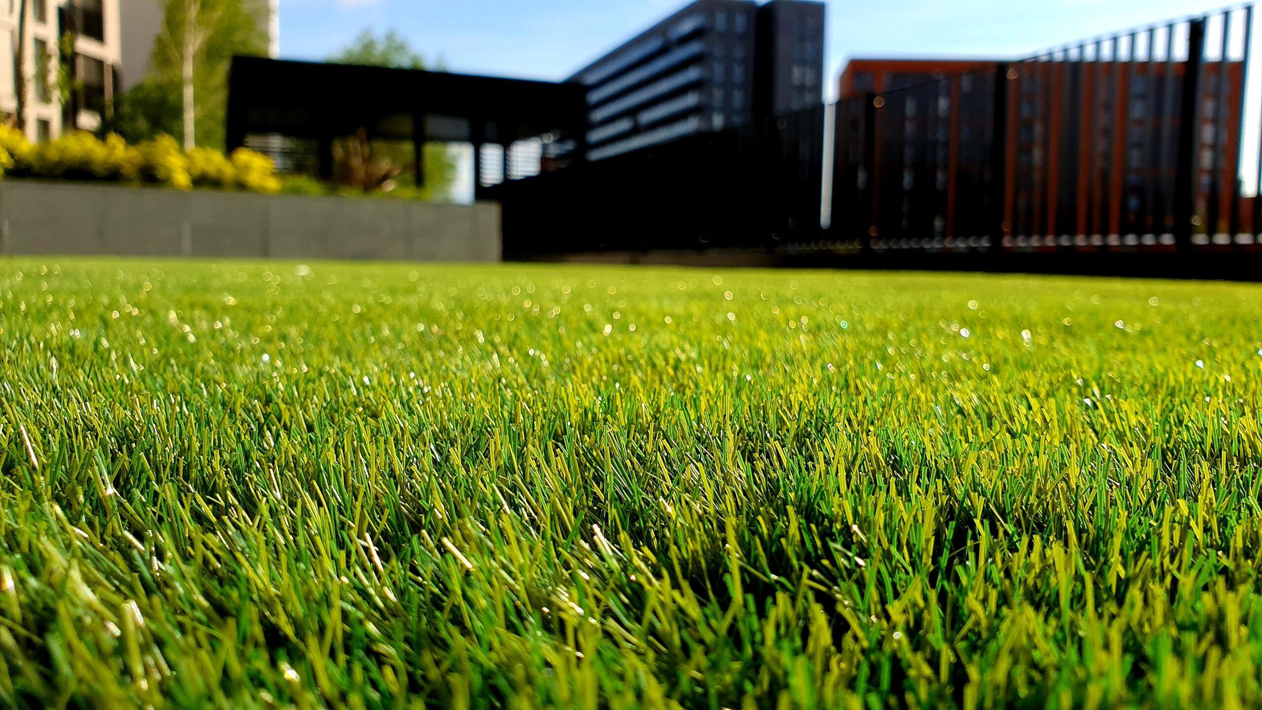 Image shows beautiful green grass