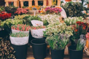 shows flowers in original potting containers