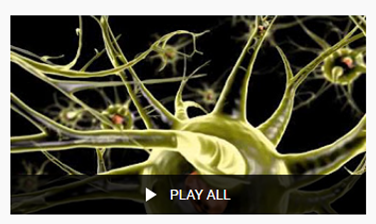 Synapse video pic