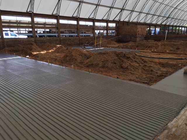 Covered dairy barn grooved concrete for traction