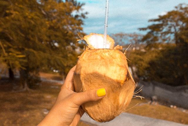 coco tenue par la main nassau bahamas