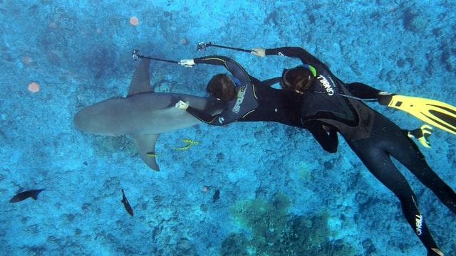 deux plongeurs requin bora bora