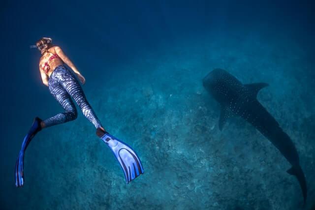 plongée femme requin baleine