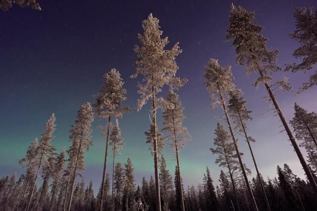 finlande aurore boréale forêt