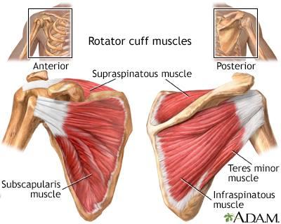 Rotator Cuff Injury/Protect it!