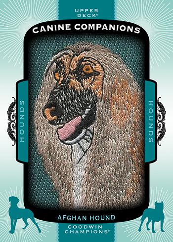 2017-Goodwin-Champions-Canine-Companions-CC76-Afghan-Hound
