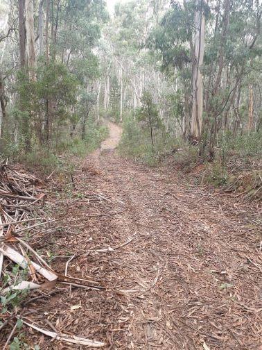 Bago Forest 4