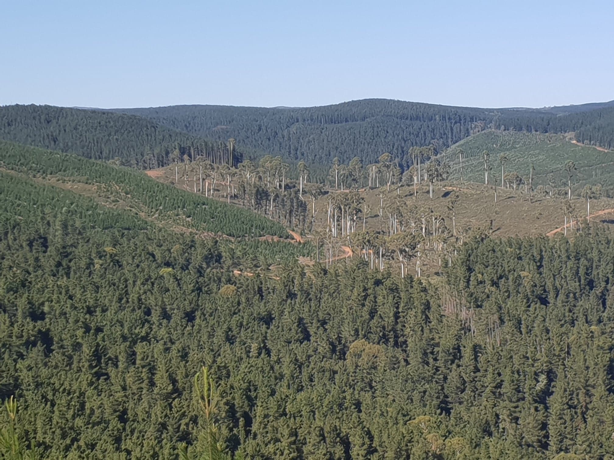 Bago forest