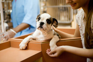 Adopting a Dog or Puppy​