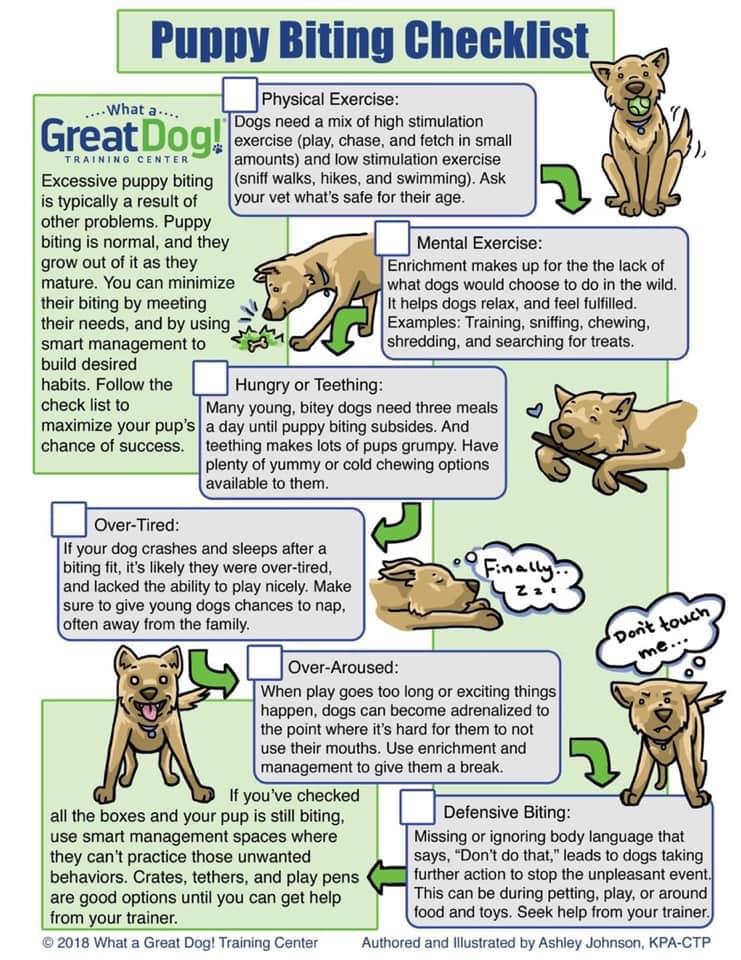 puppy biting checklist
