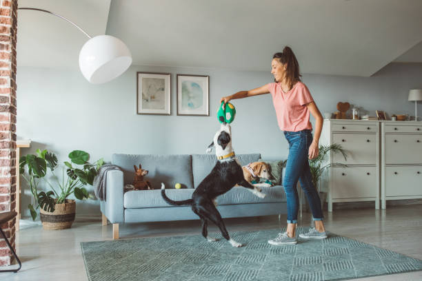 How to keep dogs happy and entertained at home