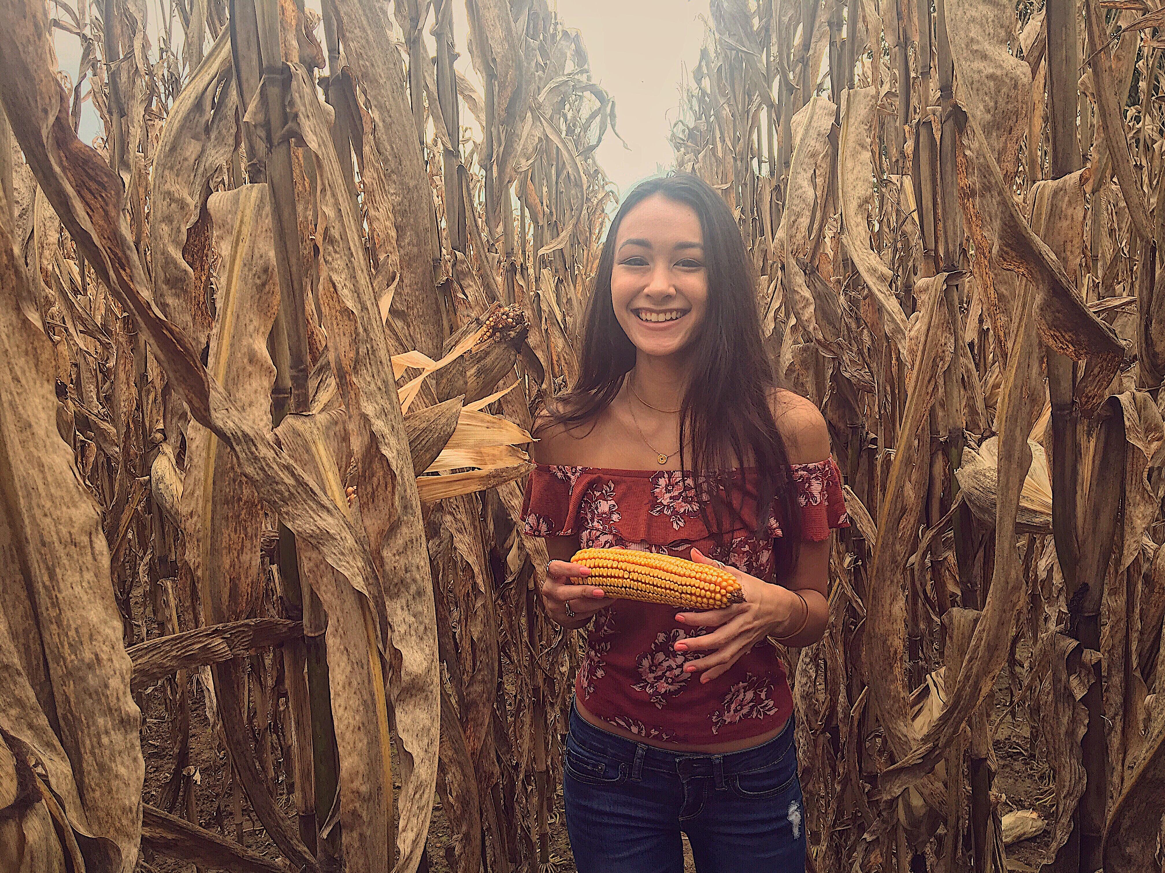 Fall Corn Field