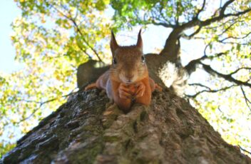 The Pitfalls of Project Squirrel Syndrome (PSS)