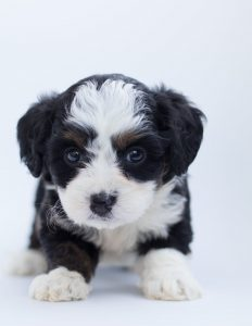 Puppy, not ROI. Is ROI the most abused term in marketing