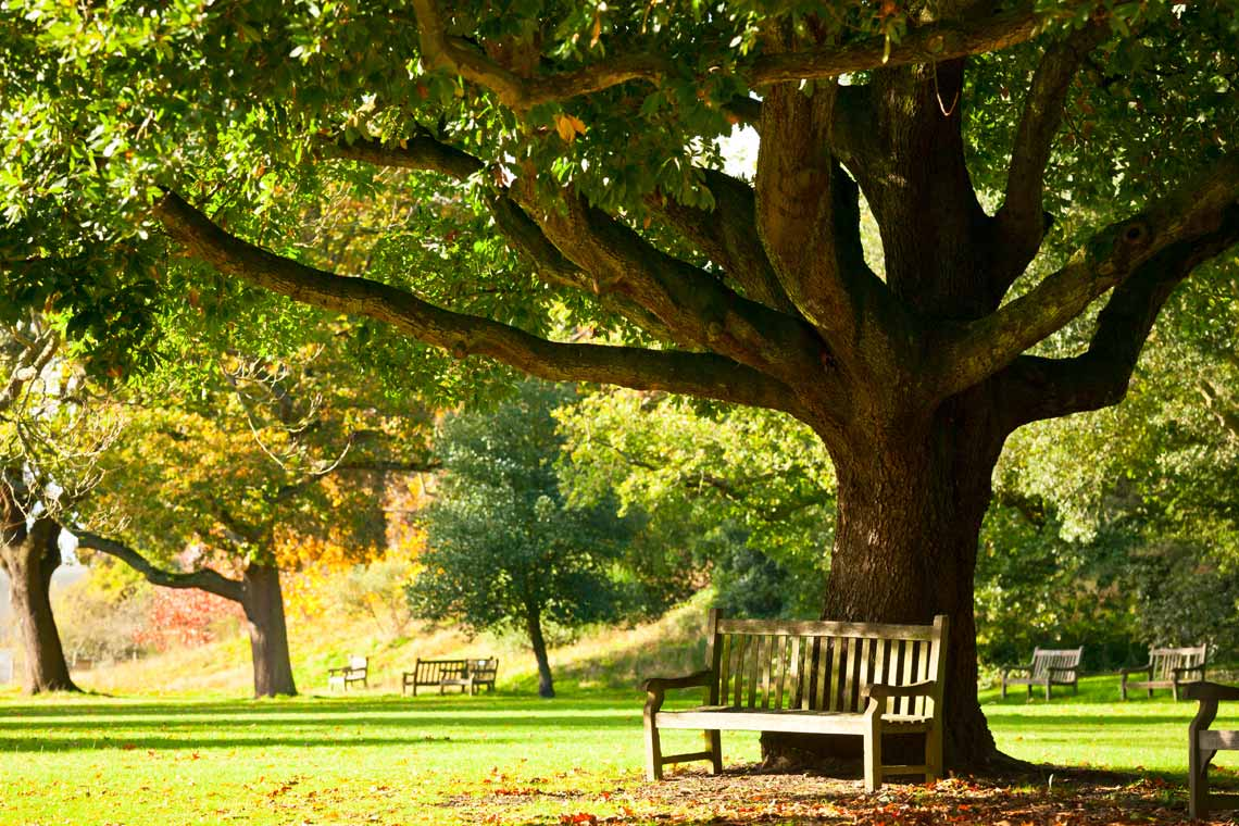 tree and park bench