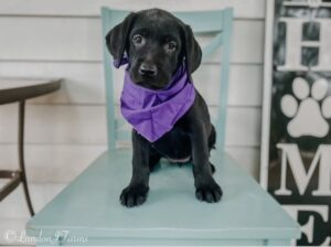 Purple Baby Girl - Available