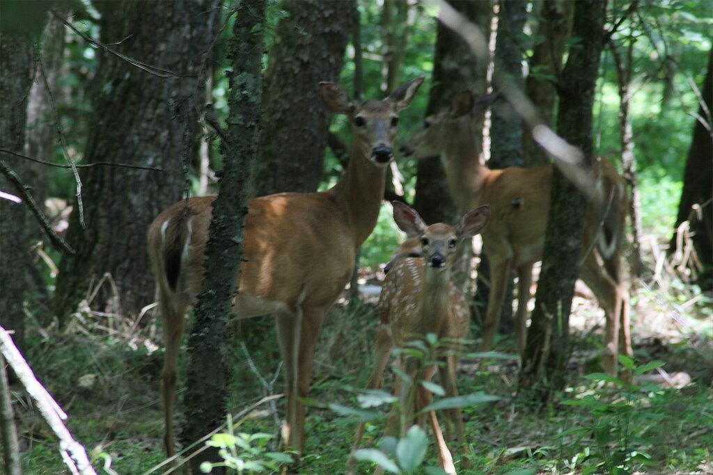 deer chapel