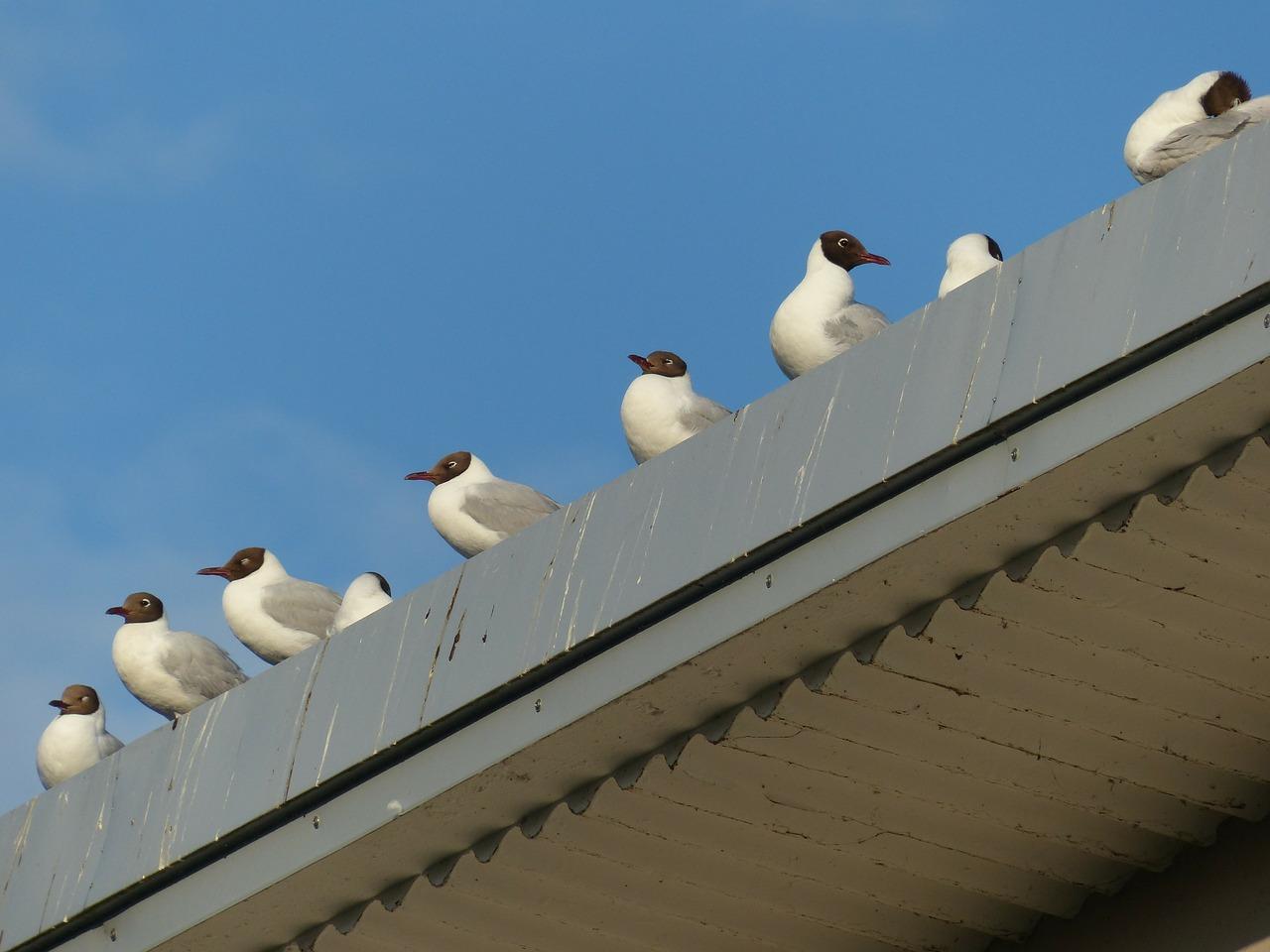 seagulls waiting