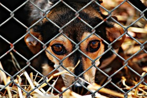 dog behind wire